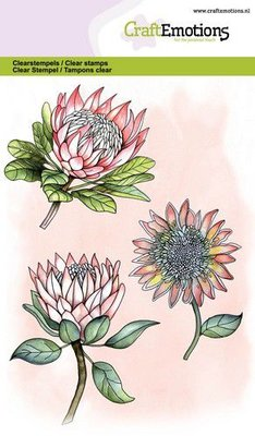 *Pre-order* CraftEmotions Clearstamp A6 - Protea Flowers